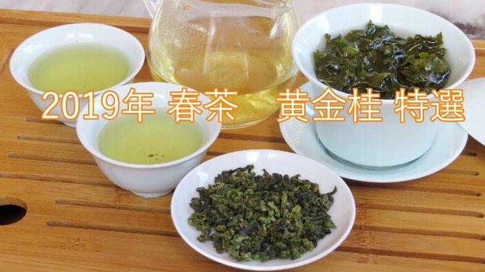 黄金桂 特選 2019年 春茶