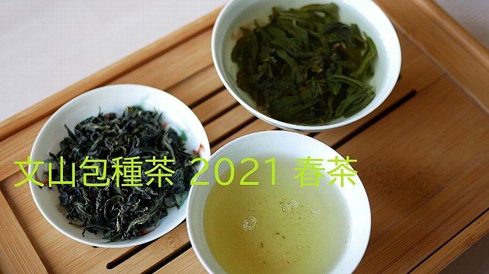 文山包種茶 2021 春茶
